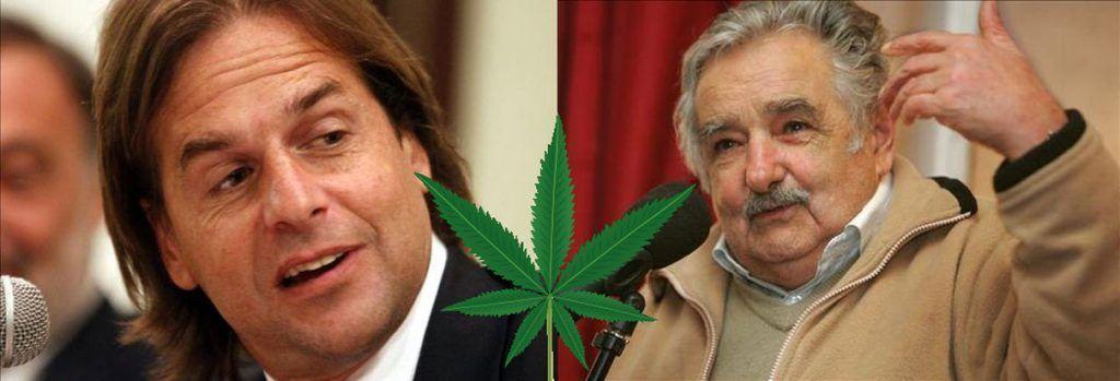 marihuana venganza politicos