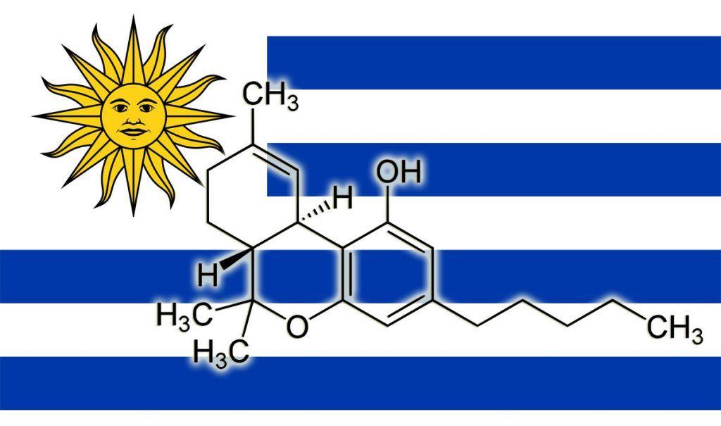 Uruguay pone un tope de un 15% de THC para la marihuana legal.