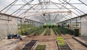 Comienza la produccion de marihuana en Uruguay